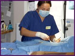 ROAR-Holgate-Surgery-bg