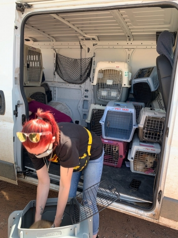 Coconino Humane Association taking in animal surrenders in Tuba City